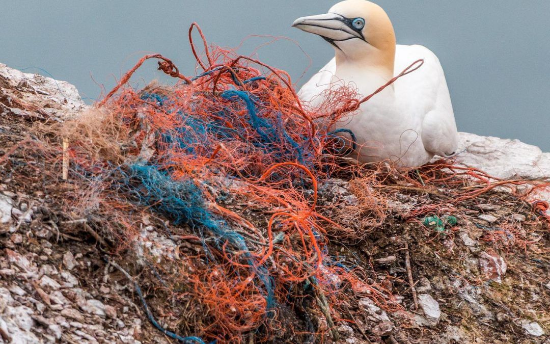 El impacto del plástico en el planeta